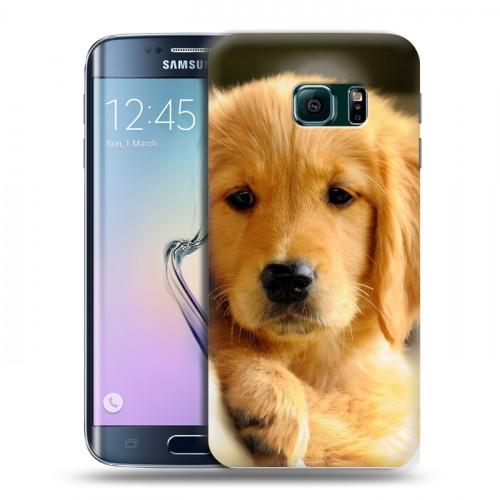 Дизайнерский пластиковый чехол для Samsung Galaxy S6 Edge Щенки